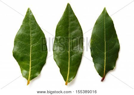 Three Bay Leaves Isolated On White From Above.