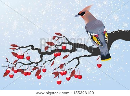 Vector illustration of waxwing on a cherry branch