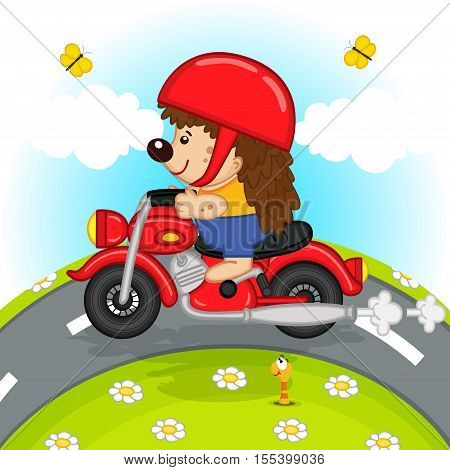 hedgehog on motorcycle rides on the road - vector illustration, eps