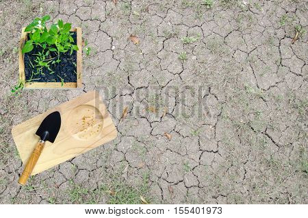 Planting seedlings in Earth Day. To encourage the planting of trees. reduce global warming The seedling is a good start for our world to increase forest. For a balanced environment