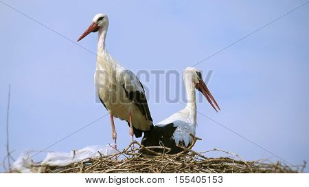 Storks. Friends of hot countries.intruder. But the place is always ready