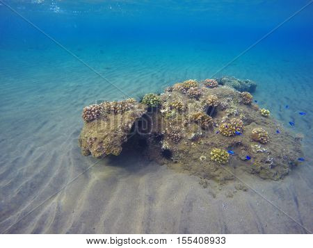 Underwater landscape with seabottom and coral reef. Sea sand at the bottom. Colorful sealife. Tropical seaside with sea inhabitants. Snorkeling photo. Natural background in blue and yellow