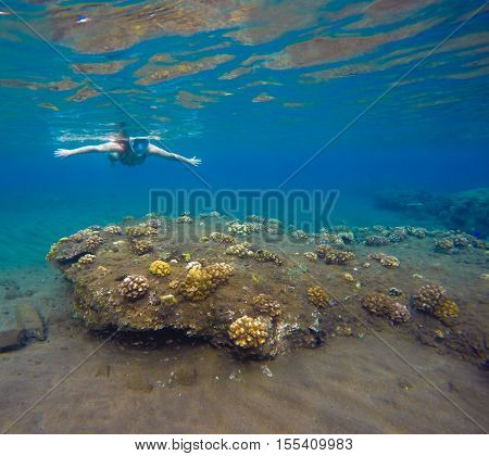 Underwater landscape with snorkel and coral reef. Snorkeling man in mask swimming undersea. Diving in tropical seaside.
