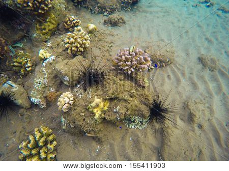 Underwater landscape with coral reef. Colorful corals diversity in tropical sea aquatory. Yellow brown and grey colors of sea bottom. Oceanic ecosystem with plants and animals. Marine background