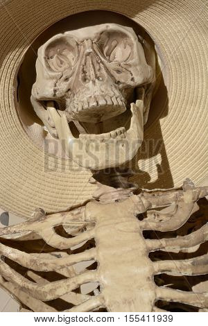 Close up of Skeleton skull in wide brimmed hat