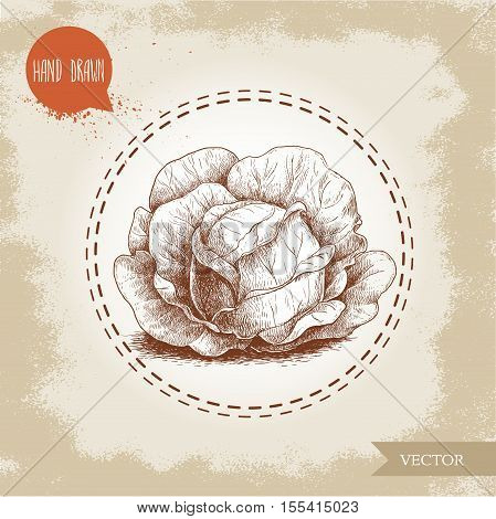 Hand drawn sketch style head of cabbage. Fresh ripe and eco vegetable vector illustration.