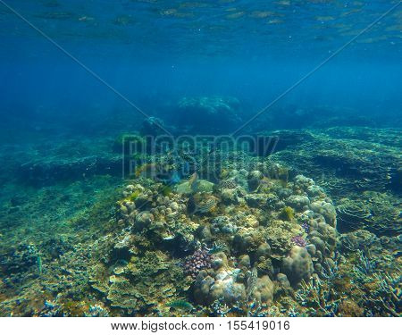 Underwater landscape with coral on sea bottom. Oceanic life in clear blue water. Seaside nature with plants and animals. Coral reef diversity with fishes. Natural aquarium background. Snorkeling photo