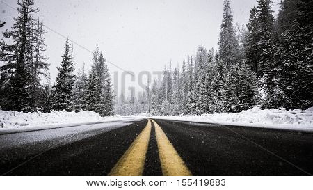 snow, tree, winter, asphalt, highway, road, land, fir, pine, yellow, line, white, black, cold