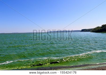 Blooming green water in reservoir on Dnieper river