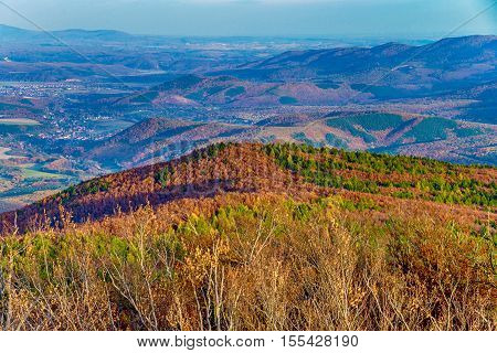 Colourful trees on a Hillside at autumn