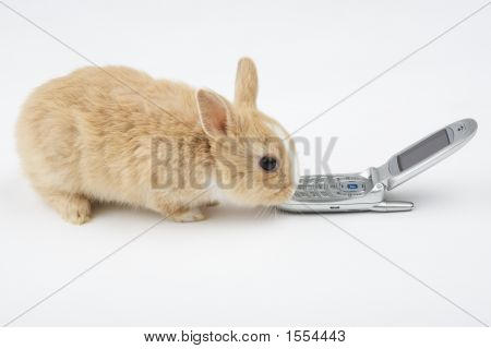 Brown-White Bunny With Mobile Phone Isolated On White