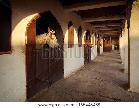 White and brown horses extending their necks out of the sunlit openings of stable.