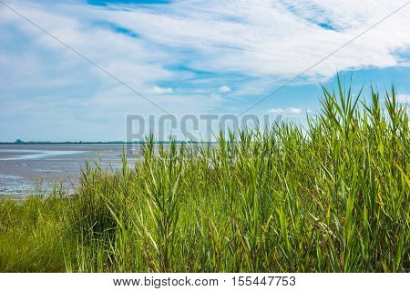 Spring grass cloudy sky and river on background