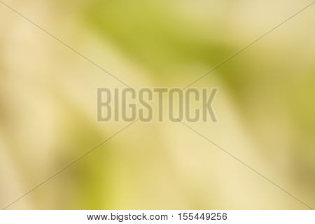 blurred background with green soft nature texture.