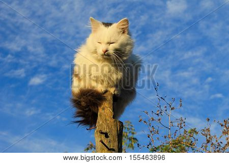 Cat sitting on a log against blue sky