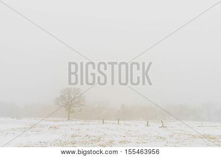 Winter Landscape  trees on snow