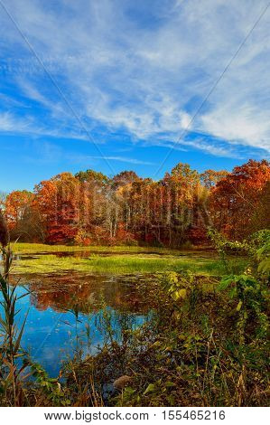 Colorful Leaves On Trees Along Lake In Autumn,