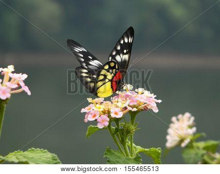 Pretty butterfly on pink flower near lake