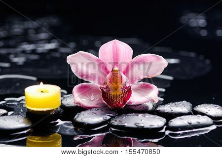 Macro of gorgeous orchid and yellow candle on black stones