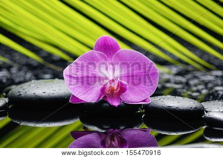 Pink orchid and palm on wet black stones