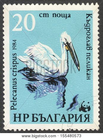 MOSCOW RUSSIA - CIRCA OCTOBER 2016: a post stamp printed in BULGARIA shows a Pelecanus crispus bird the series