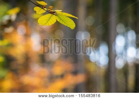 Amazing Colorful Blurred Natural Background With Autumnal Leaves