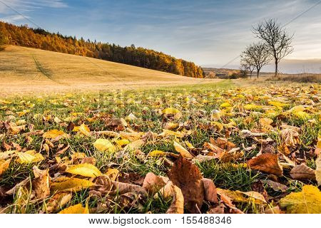Landscape with fallen leaves trees forest and blue sky - colorful fall