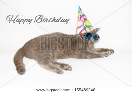 Happy birthday card with funny cat wearing party hat