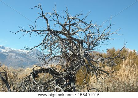 A twisted, dry bush in the desert