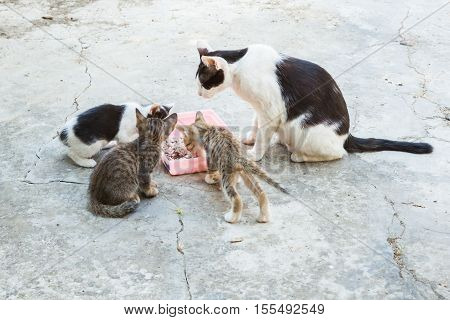 Homeless Cat And Little Kitty Eating Rice On Dish