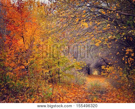 Pathway through the autumn forest. Gloomy day