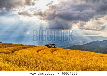 Beautiful Landscape Of Rice Terrace View, Chiang Mai, Northern Thailand