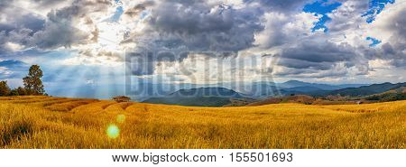 Beautiful Landscape Of Rice Terrace  View With Sun Flare , Chiang Mai, Northern Thailand