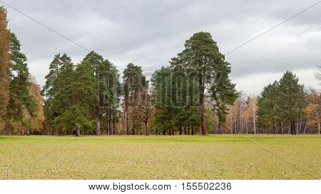 Panorama of a large clearing in the park covered grass and fallen leaves on the background of the conifers and deciduous trees and cloudy sky in autumn day