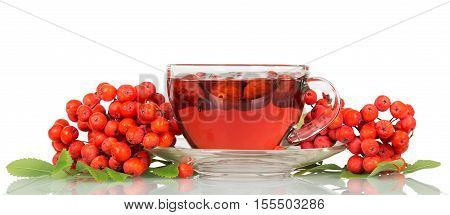 Rowan berries and a cup of tea with of rosehips isolated on a white background.
