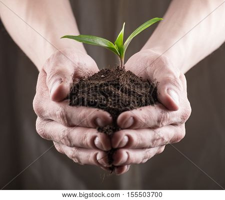 Green Sprout In Soil