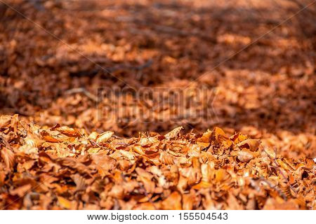 Fall tree leafs on grass background in autumn