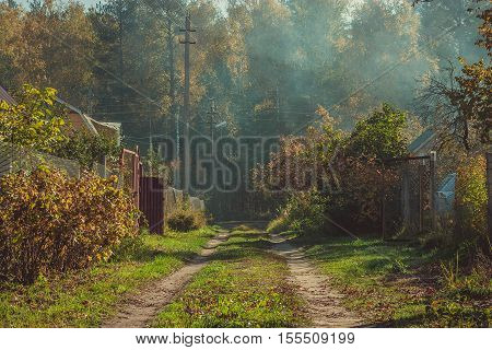 Road in the autumn forest near the country houses