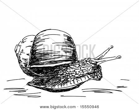 Hand drawn snail. Visit my portfolio for big collection of doodles poster