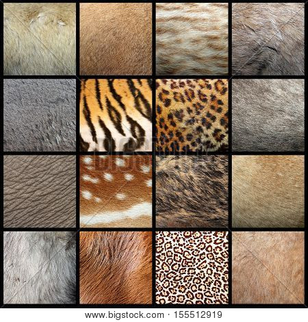 large collection of animal pelts real fur