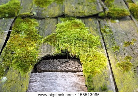 detail of fungal damage on wooden tiles of traditional roof green moss grown