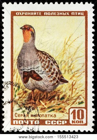 LUGA RUSSIA - NOVEMBER 6 2016: A stamp printed by USSR (RUSSIA) shows The Grey Partridge (Perdix perdix) also known as the English partridge Hungarian partridge or circa 1957