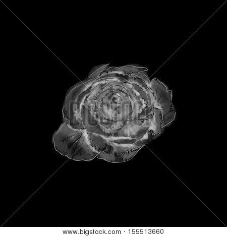 Flower fashion negative on black background, elegant, luxurious style