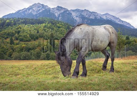 Horse Grazing In The Alpine Pasture With The Mountain Peaks And Forest In The Background In The Carp