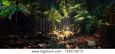 Panorama of the mountain river in the jungle, Morning, India, Goa