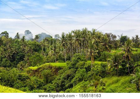 tropical jungle on the island of Bali Indonesia