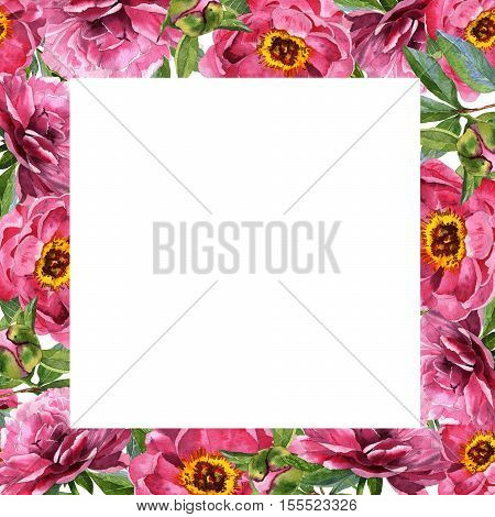 Wildflower peony flower frame in a watercolor style isolated. Aquarelle wild flower for background, texture, wrapper pattern, frame or border.