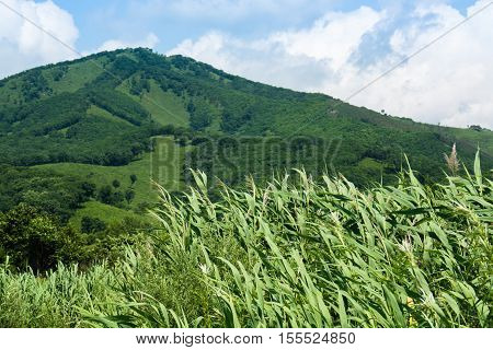 Green hill against blue sky with clouds. Overgrown of reed on the foreground.