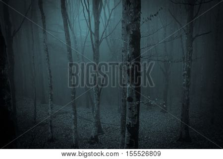 Photo of dark night in the misty forest