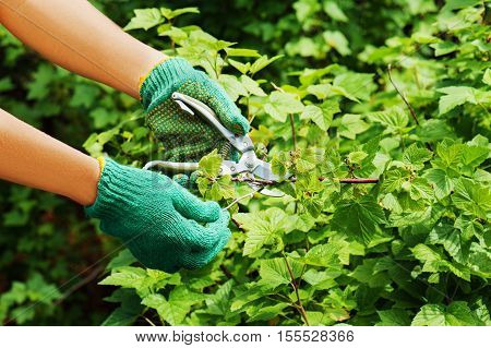 Hands with green pruner in the garden.